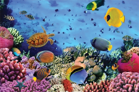 Correl Reef Jigsaw - 1000 Pieces