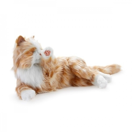 Tabby Cat Dementia Companion Pet